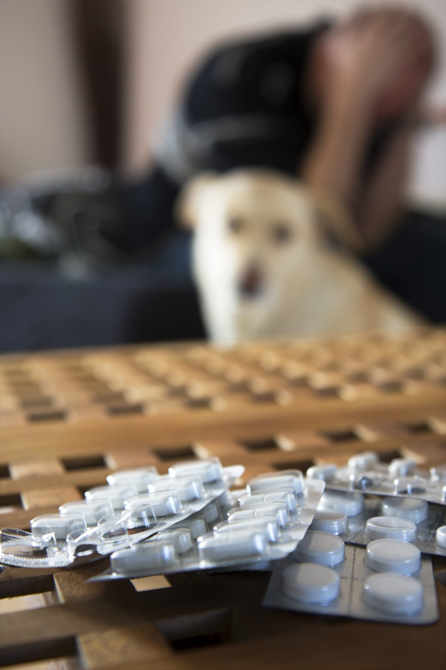 human medications and pets