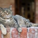 Older Cat 2a