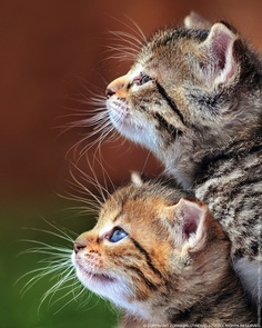 Profile of Two Cats
