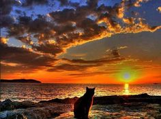 Cat & Sunset