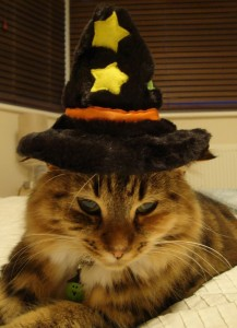 Cat in Halloween Costume