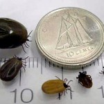 Different Sizes of ticks