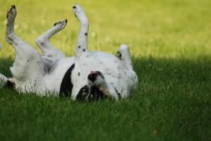 dog woth ticks