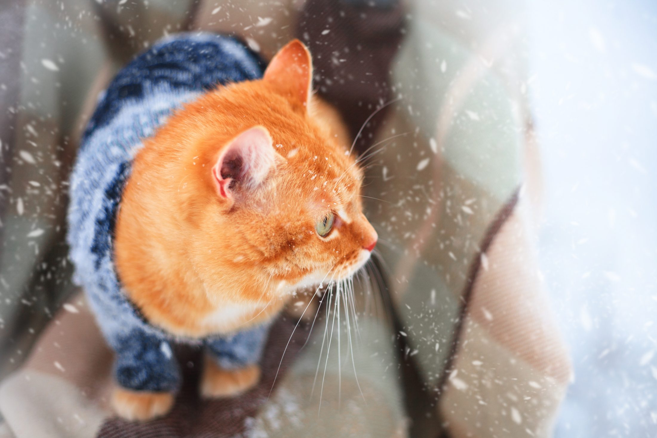Beautiful red cat in a knitted sweater outdoors