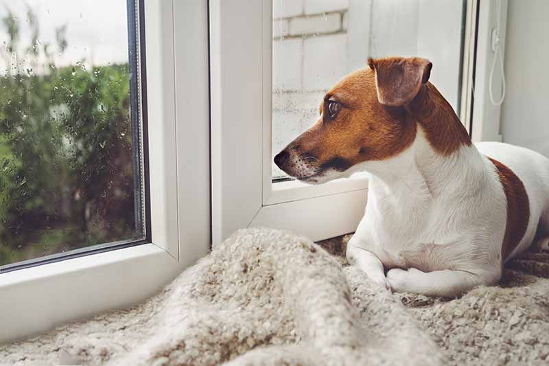 Separation anxiety in pets can intensity when kids go back to school