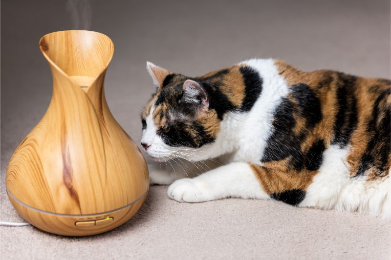 A cat sniffs an essential oil diffuser