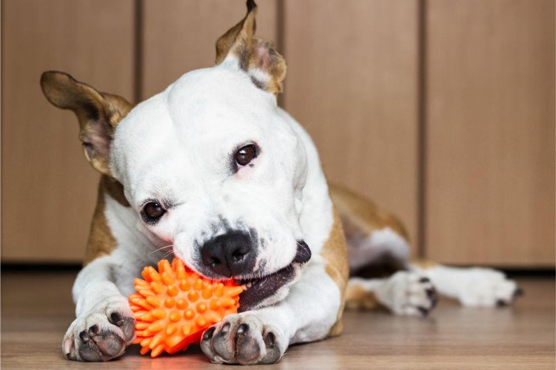 Are They All Risky, or Do Safe Pet Toys Really Exist?