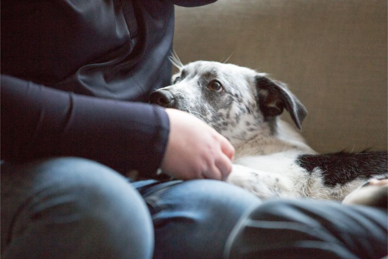 Lumps and Bumps on Pets