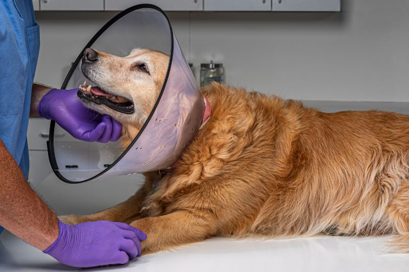 Making it Through Pet Surgery: Our Tips and Tricks