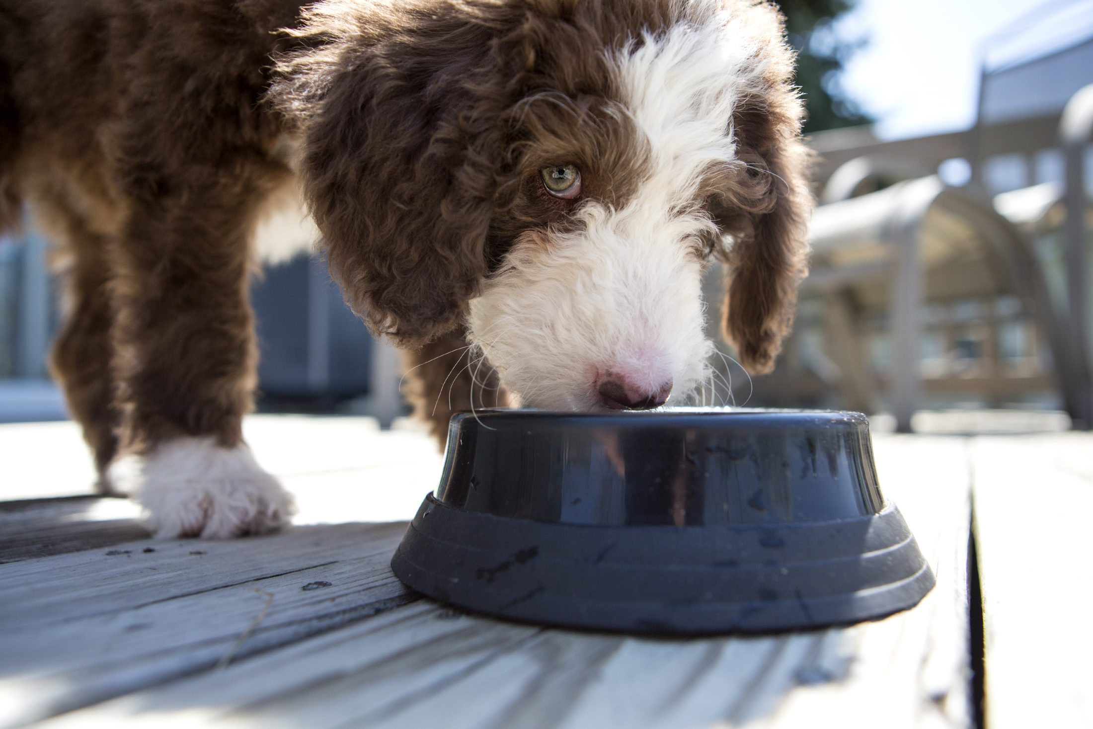 The Scoop on Fad Diets for Dogs