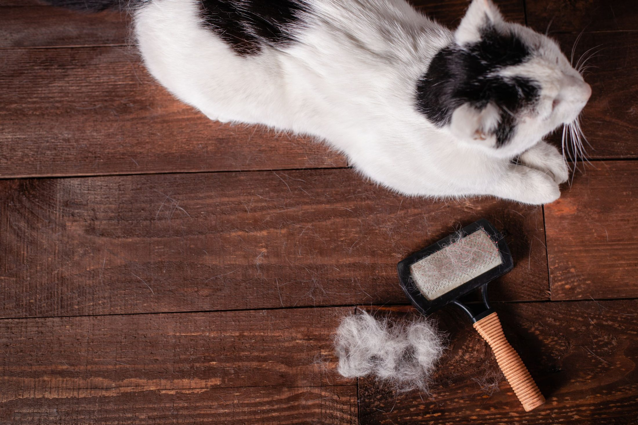It's That Time Of Year Again, But When Does Cat Shedding Become Too Much?