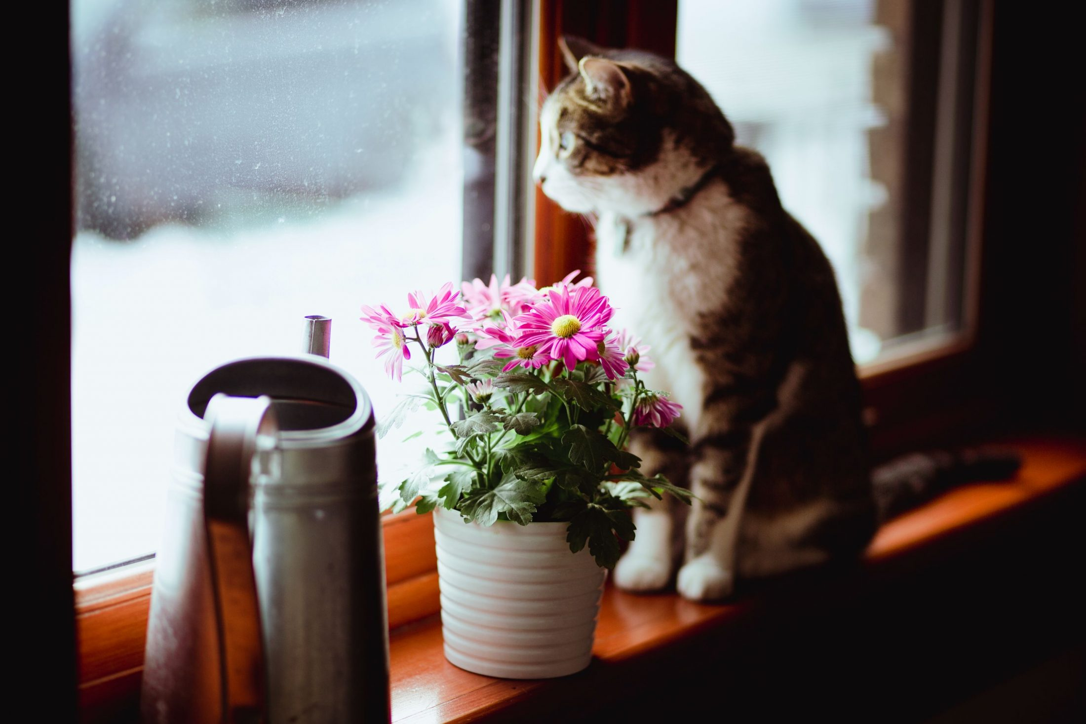 A cat and a houseplant.