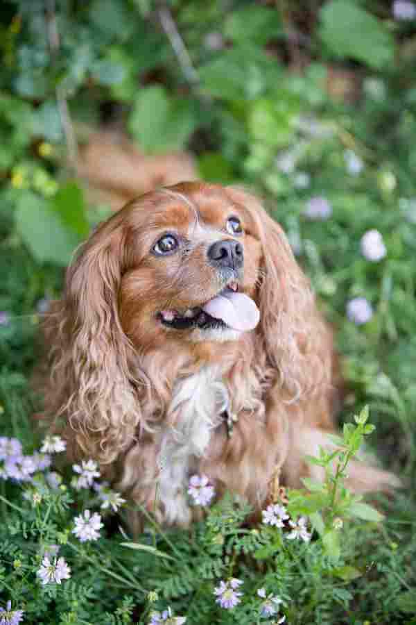 Thornhill Pet Dental Care | Summeridge Animal Clinic